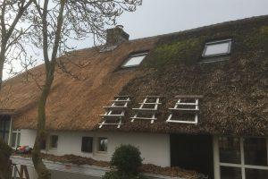 Een dak in onderhoud bij Rietdekkersbedrijf Scholman